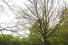 2-Fingerbaum-Bessungen