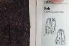 13-Spuren-Lesen